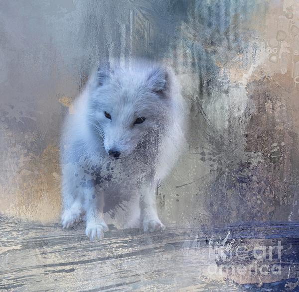 Eva Lechner - Snow Fox