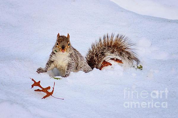 Anna Serebryanik - Snow Squirrel