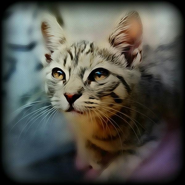 Jenn Teel - Soft Kitty