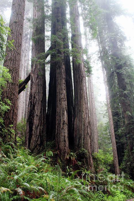 Michelle Williamson - Soft Starlight Forest