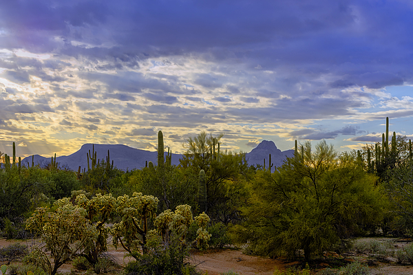 Sonoran Afternoon H07 Photograph