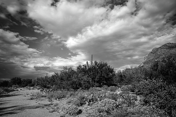 Sonoran Afternoon H10 Photograph
