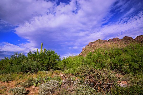 Sonoran Afternoon H40 Photograph