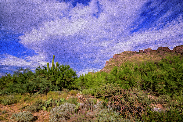 Sonoran Afternoon Op41 Photograph