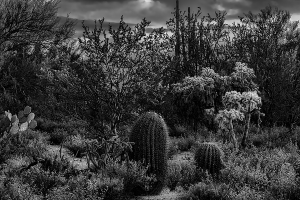 Sonoran Desert H03 Photograph