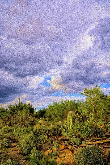 Sonoran Desert Op14 Photograph