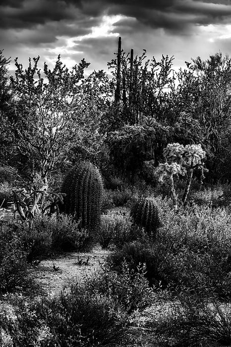 Sonoran Desert V40 Photograph