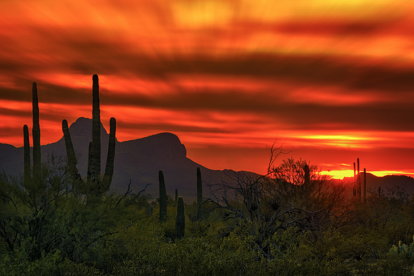 Sonoran Sunset H38 Photograph