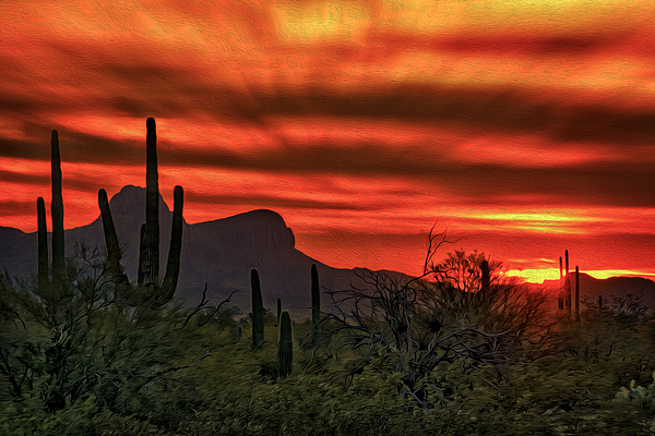 Sonoran Sunset H39 Photograph