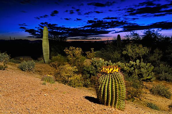 Sonoran Twilight Photograph
