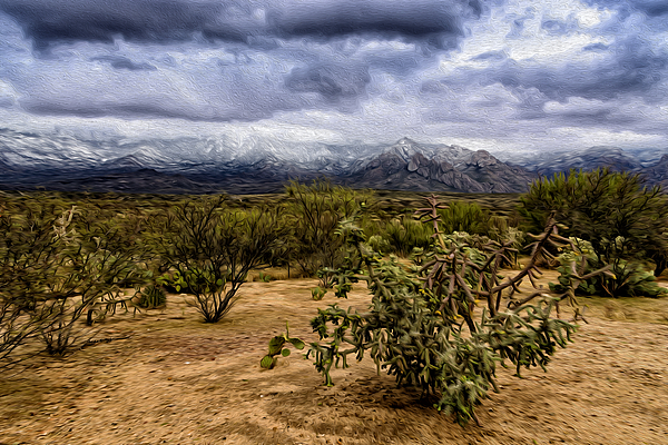 Sonoran Winter H46 Photograph