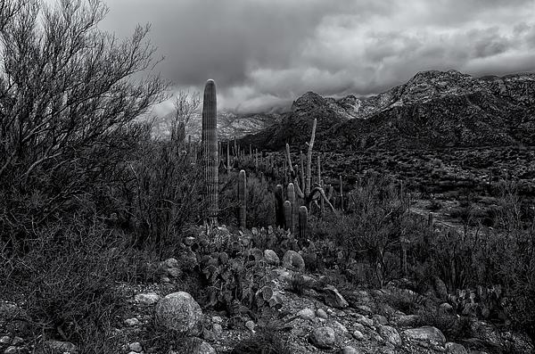 Sonoran Winter No.2 Photograph