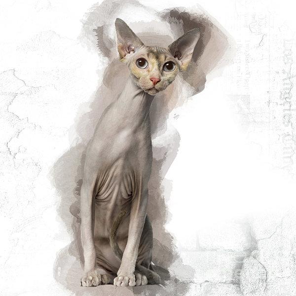 Soo Cute Sphynx With Light Blue Eyes Digital Art