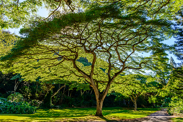 Michael Scott - Spider Tree