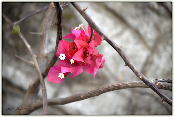Sonali Gangane - Spike of Colors