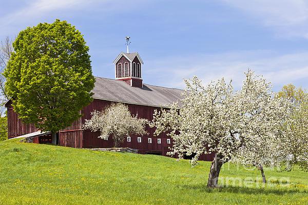 Alan L Graham - Spring Barn