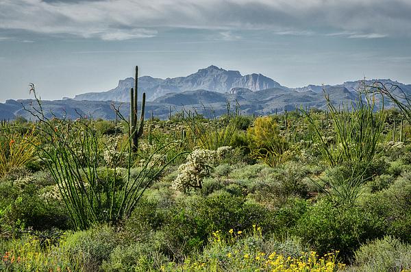 Saija Lehtonen - Spring Day In The Sonoran