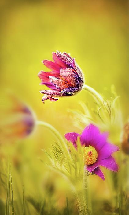 Oksana Ariskina - Spring Romantic Flower