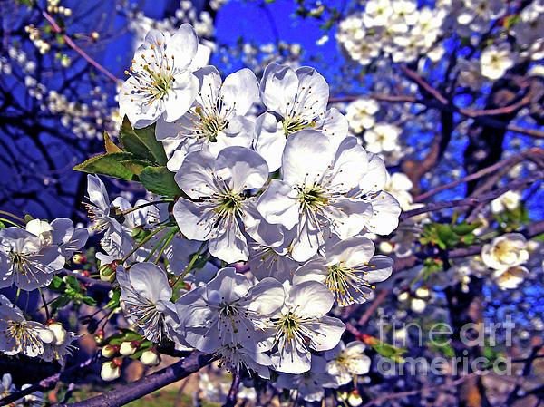 Jasna Dragun - Spring Joy