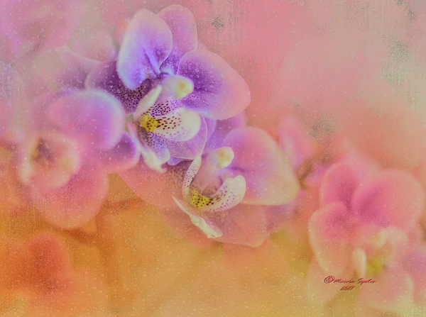 Marvin Spates - Spring Orchids