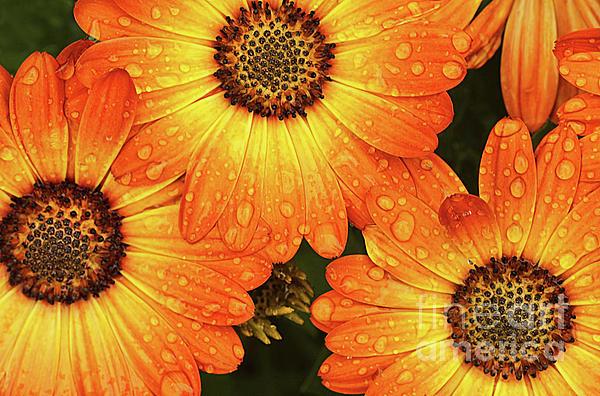 Darren Fisher - Spring Showers