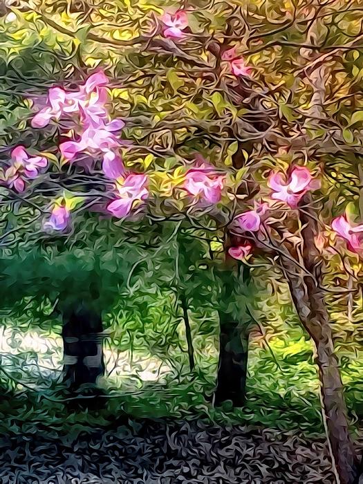 Robin Regan - Spring Will Come