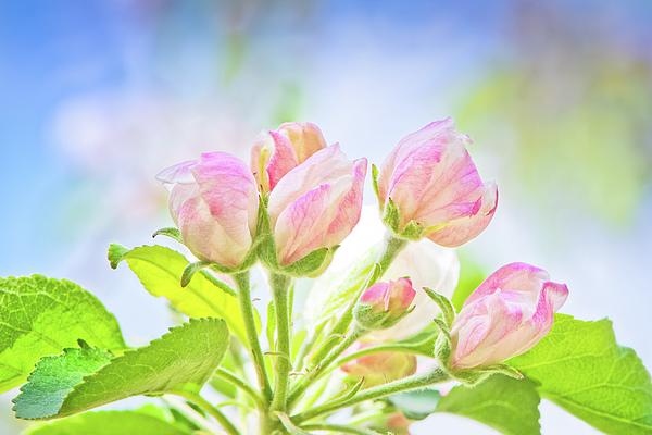 Jane Star - Springtime - Blooming tree - 7