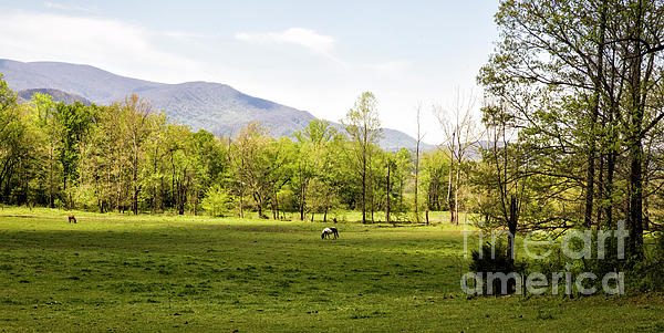 Felix Lai - Springtime in Cades Cove Great Smoky Mountains National Park 2