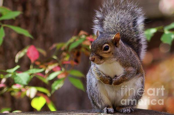 Jennifer White - Squirrel Patiently Begs