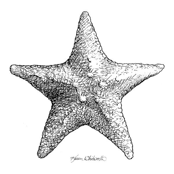 coastal starfish drawing black and white sea star beach decor
