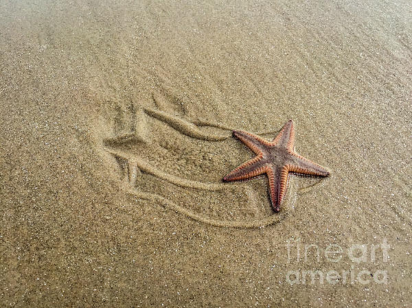Debra Martz - Starfish on the Beach