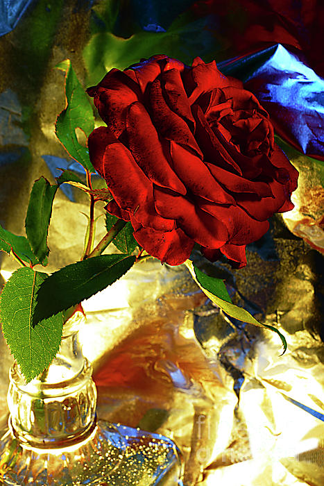 Alexander Vinogradov - Still Life With Red Rose.