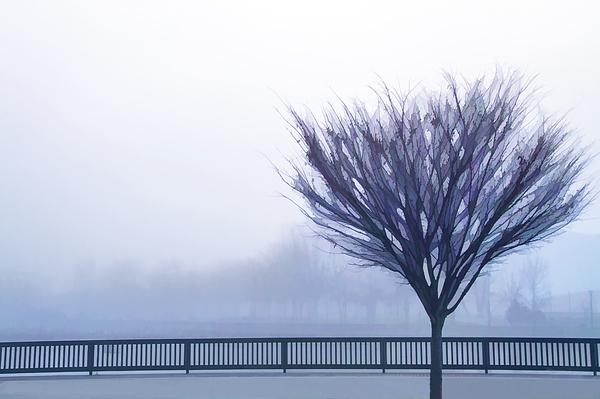 Terry Davis - Stockton Waterfront