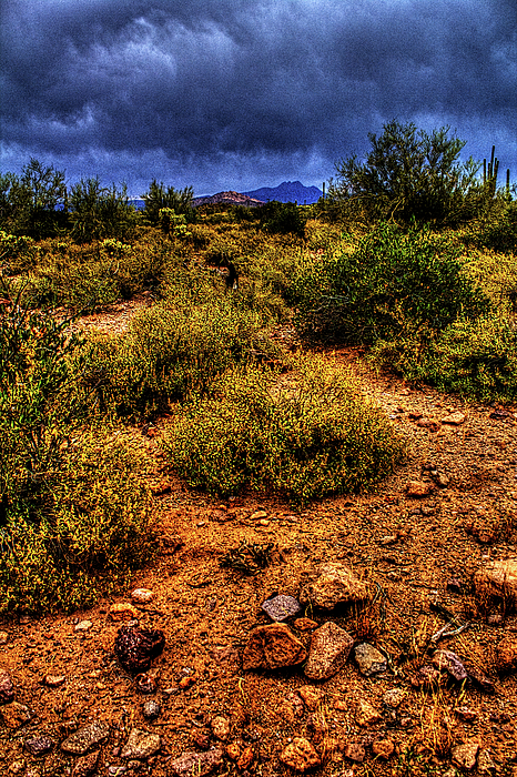 Storm Clouds Over The Sonoran Desert In Spring Photograph
