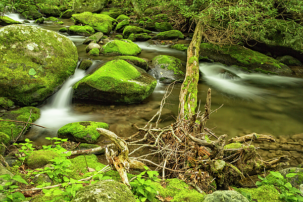 Kay Brewer - Streams of the Smoky Mountains