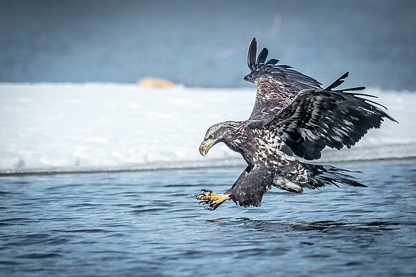 Paul Freidlund - Stretched Out Eagle