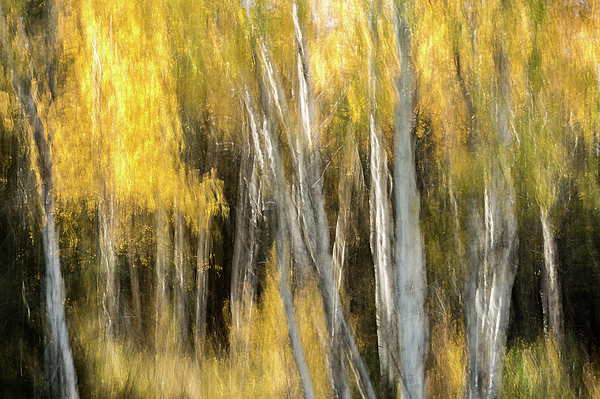 Ann Skelton - Study In Abstract No. 287, Yellowstone
