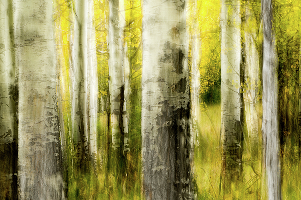 Ann Skelton - Study In Abstract No. 36, Yellowstone