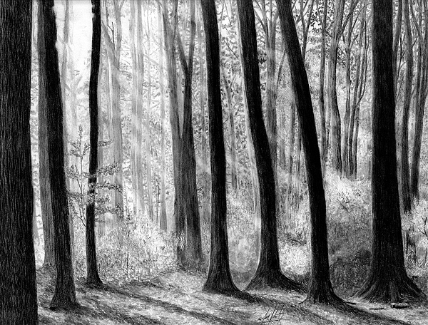 James Schultz - Sun Rays through the Trees Drawing