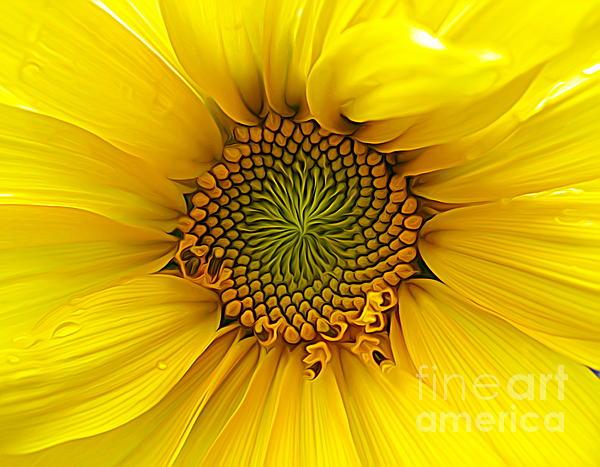 Rose Santuci-Sofranko - Sunflower Macro Expressionist Effect