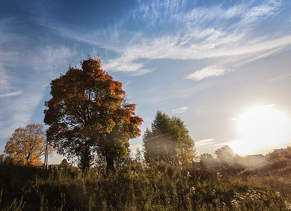 Anna Matveeva - Sunny autumn day