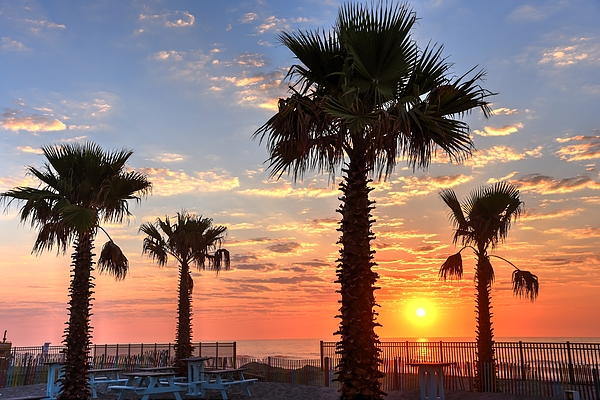 Bob Cuthbert - Sunrise Through The Palms