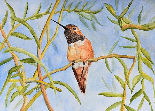 Linda Brody - Sweet Hummingbird