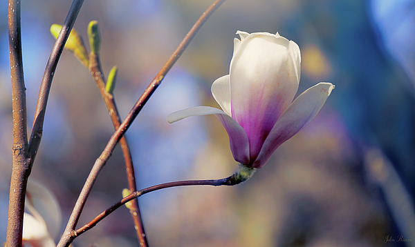 John Rivera - Sweet Magnolia