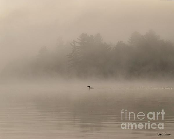 Jan Mulherin - Swimming Through the Fog on Woodbury Pond