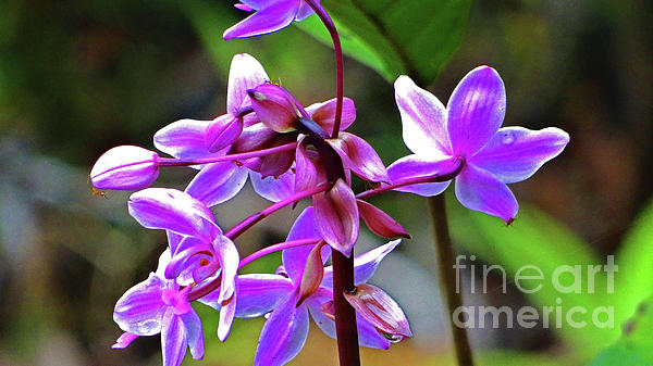 Eunice Warfel - Tanah Merah Wild Orchids