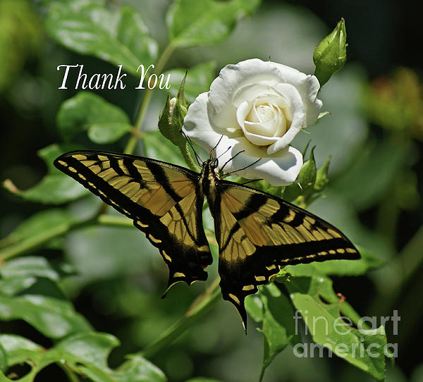 Debby Pueschel - Thank You Butterfly