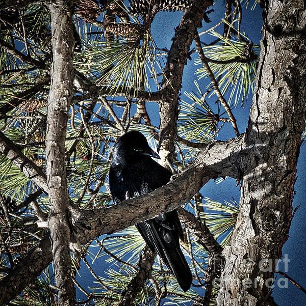 Skip Willits - That Crow In The Backyard
