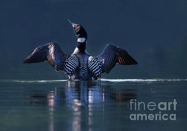 Sandra Huston - The Beauty and Strength of a Common Loon