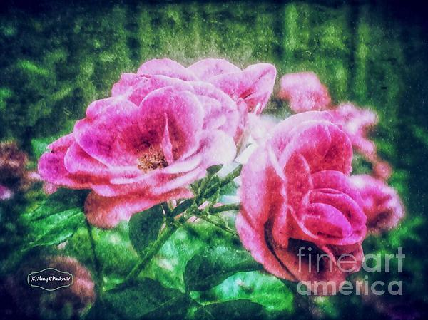 MaryLee Parker - The  Beauty Of Roses